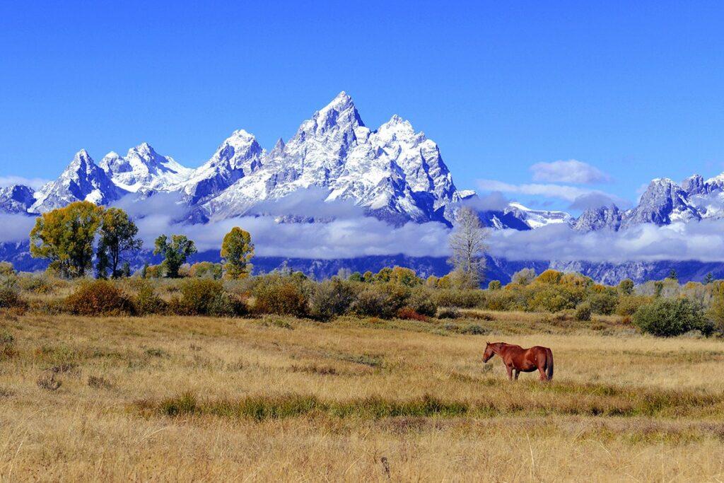 Start Business in Wyoming